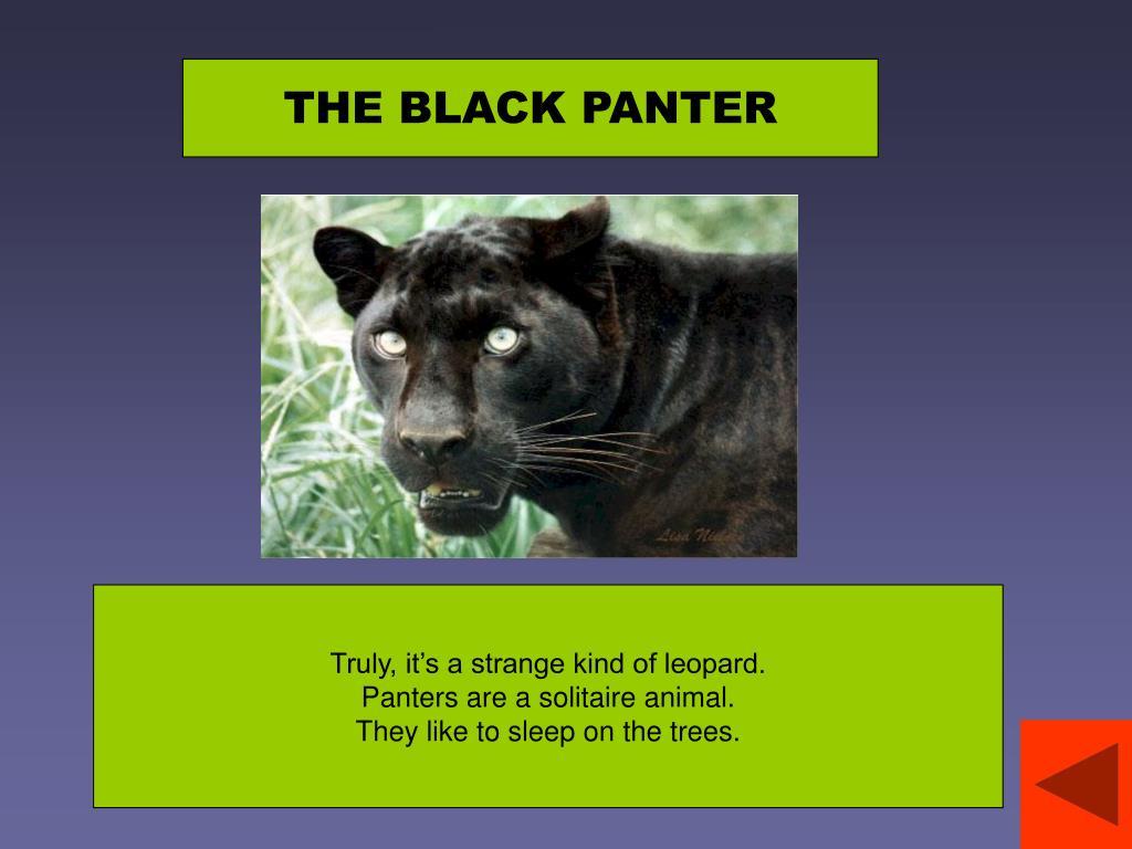 THE BLACK PANTER