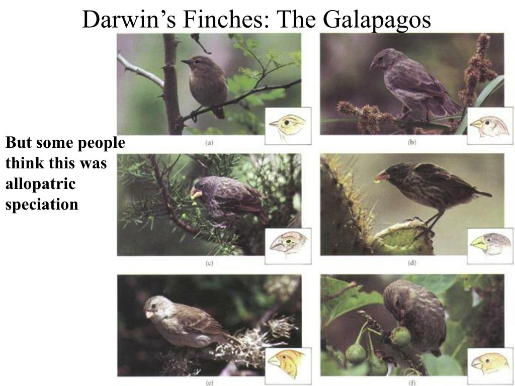 Darwin's Finches: The Galapagos