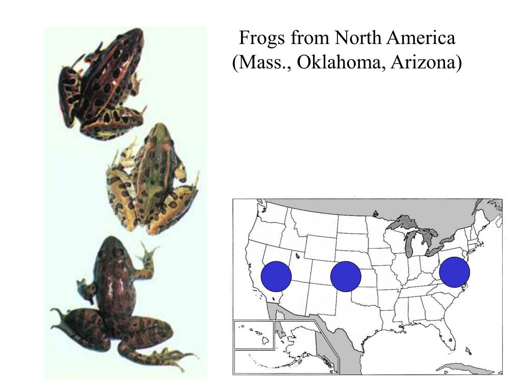 Frogs from North America