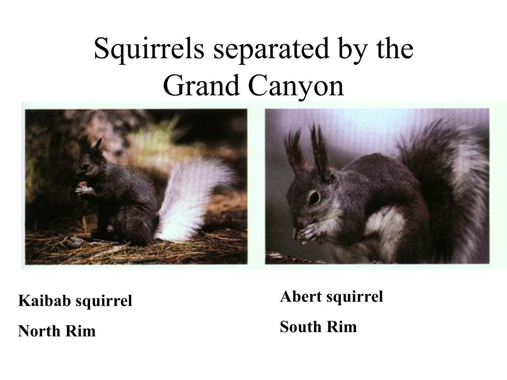 Squirrels separated by the