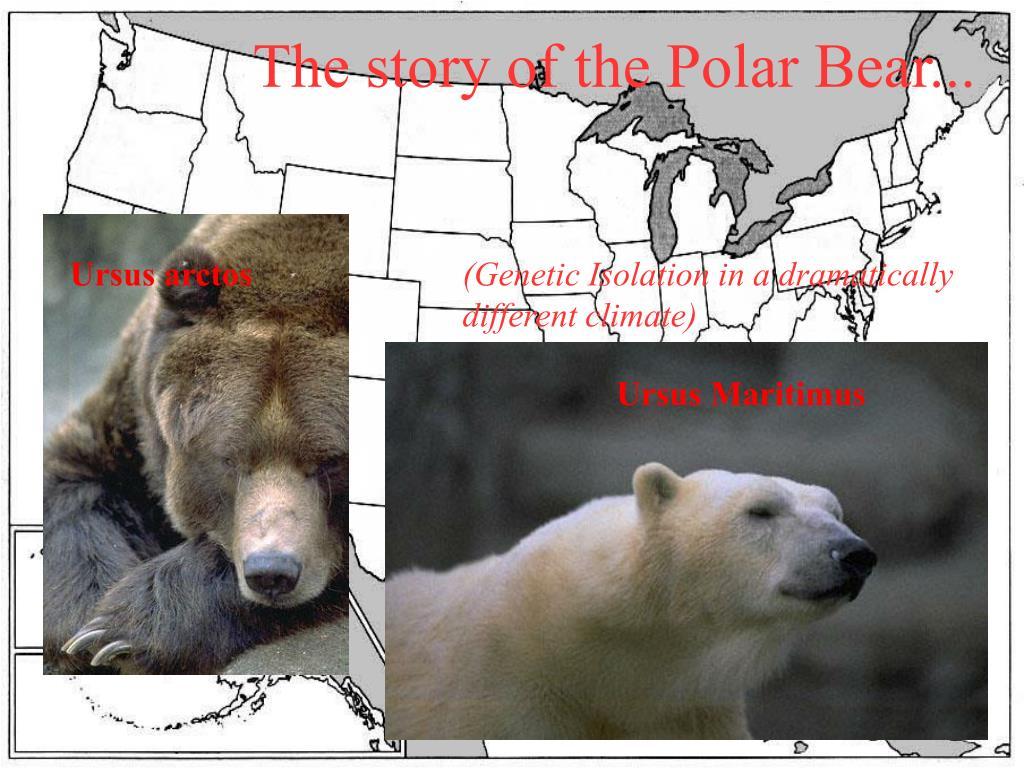 The story of the Polar Bear...