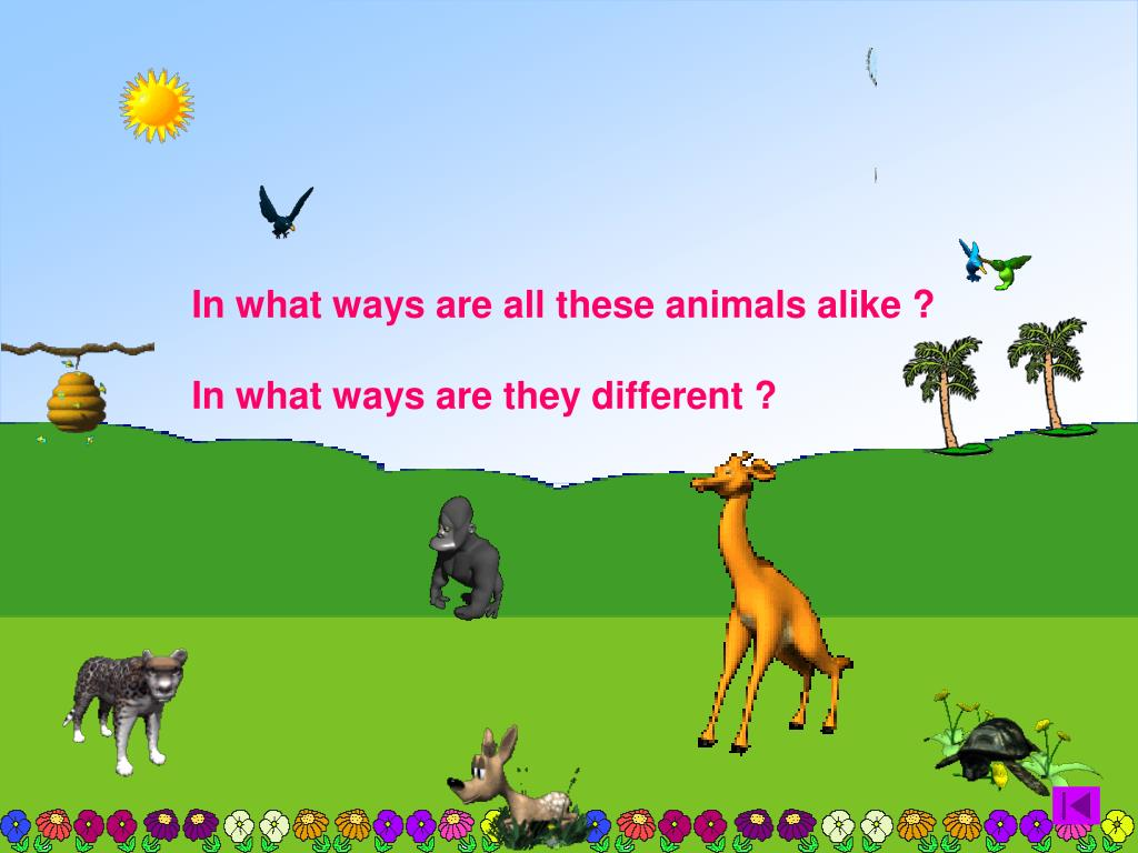 In what ways are all these animals alike ?