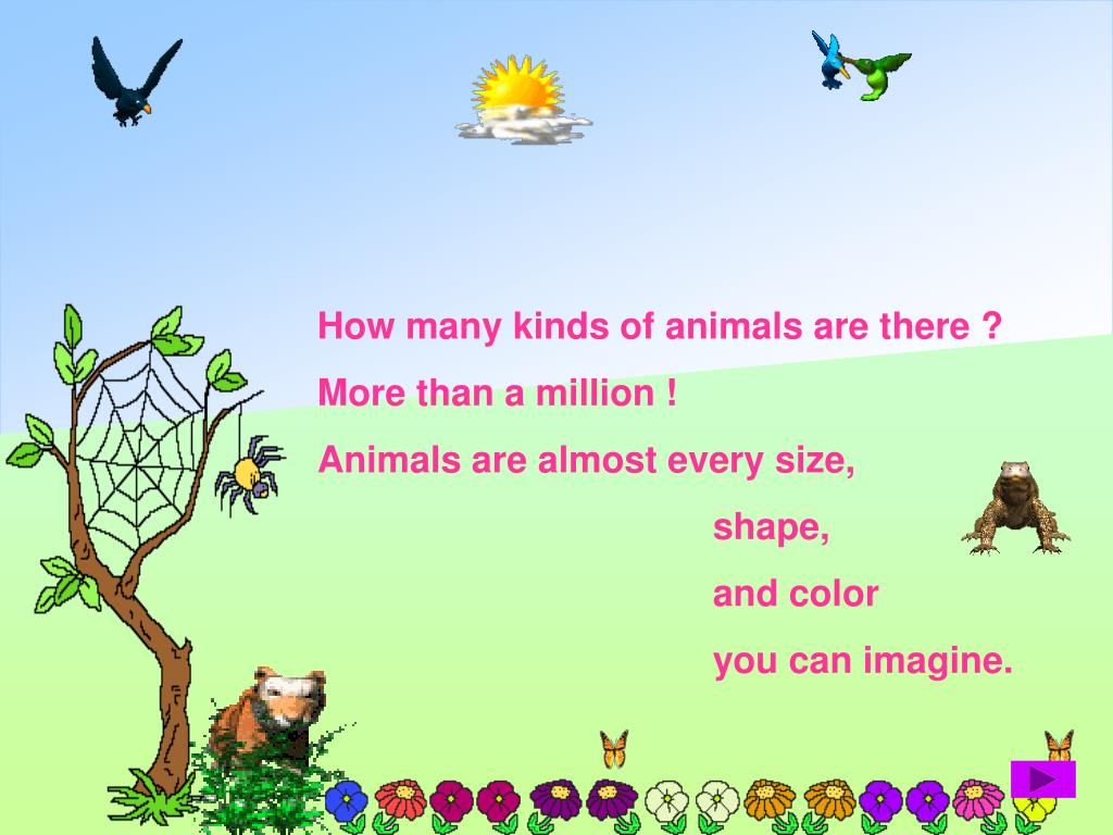How many kinds of animals are there ?