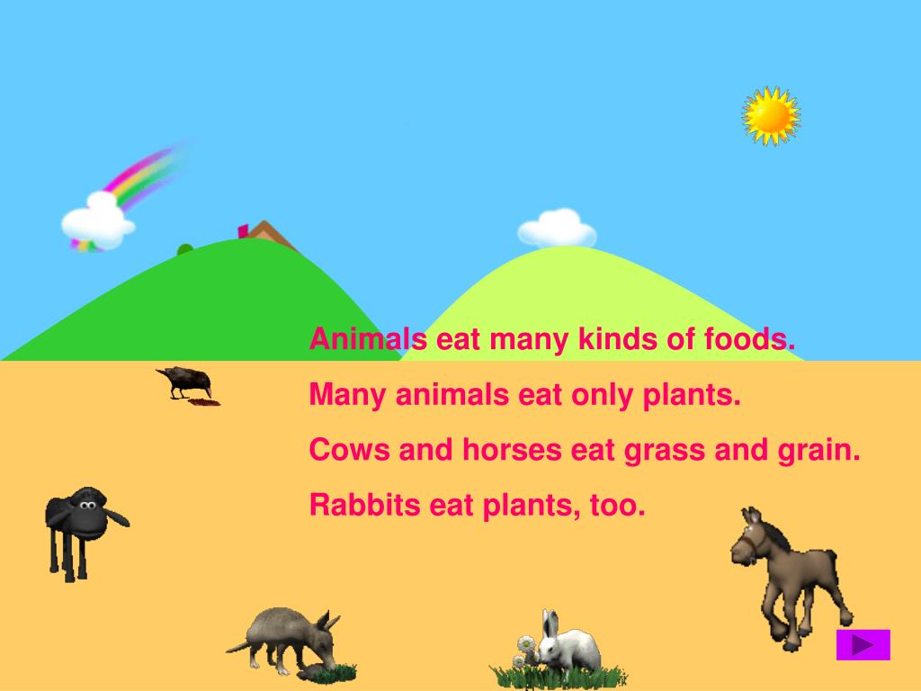 Animals eat many kinds of foods.