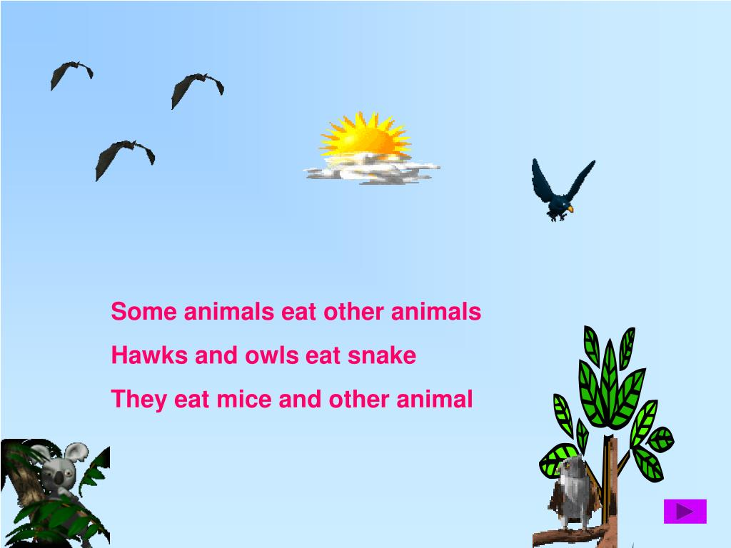 Some animals eat other animals