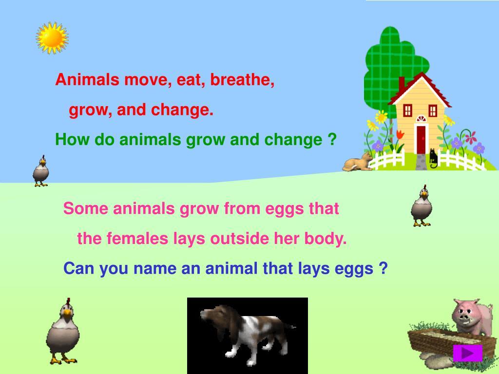 Animals move, eat, breathe,