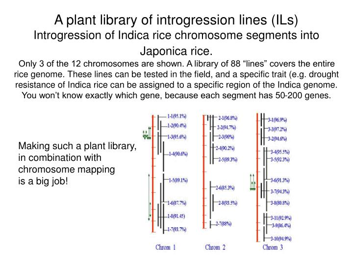 A plant library of introgression lines (ILs)