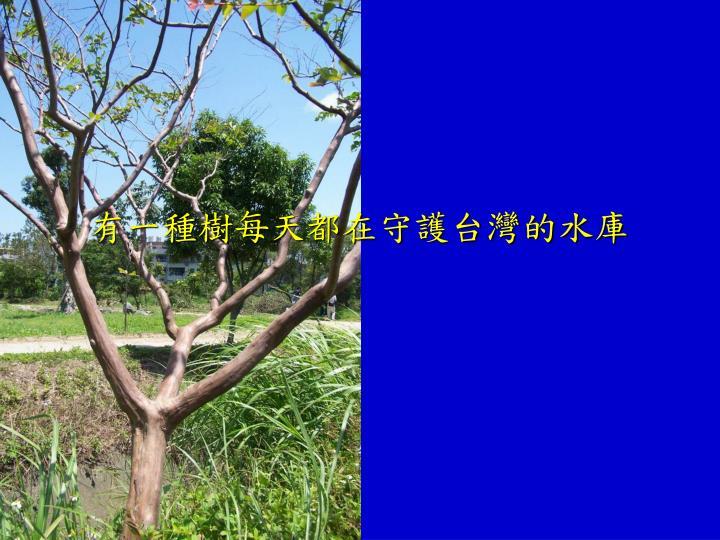 有一種樹每天都在守護台灣的水庫
