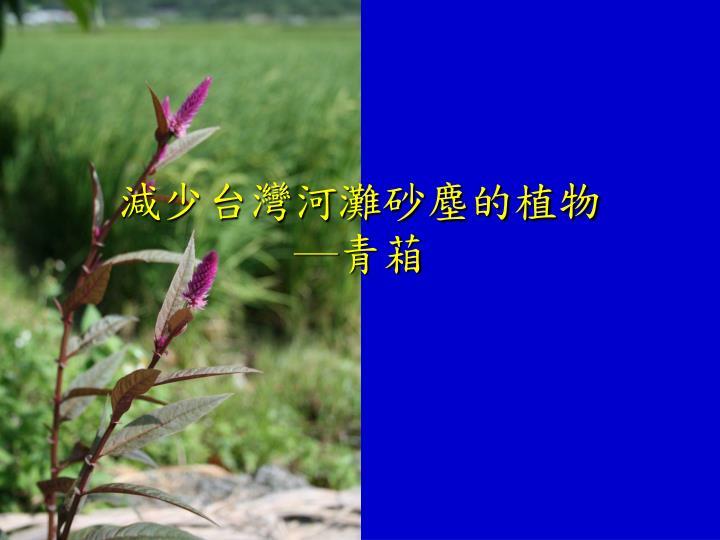 減少台灣河灘砂塵的植物
