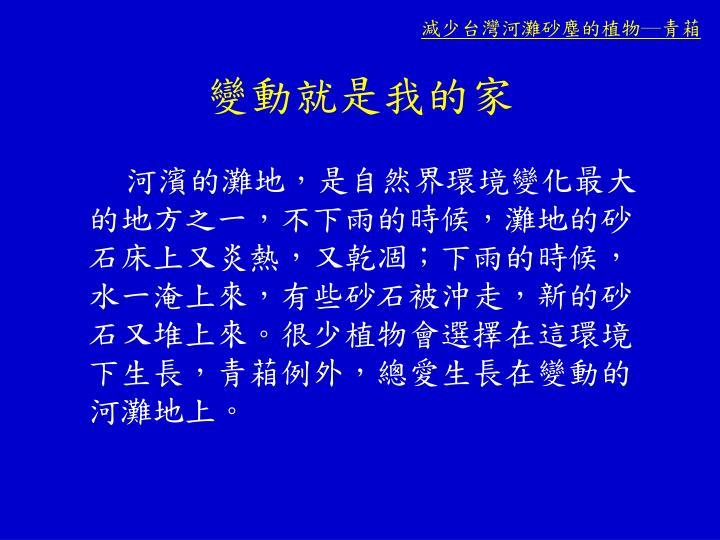 減少台灣河灘砂塵的植物─青葙