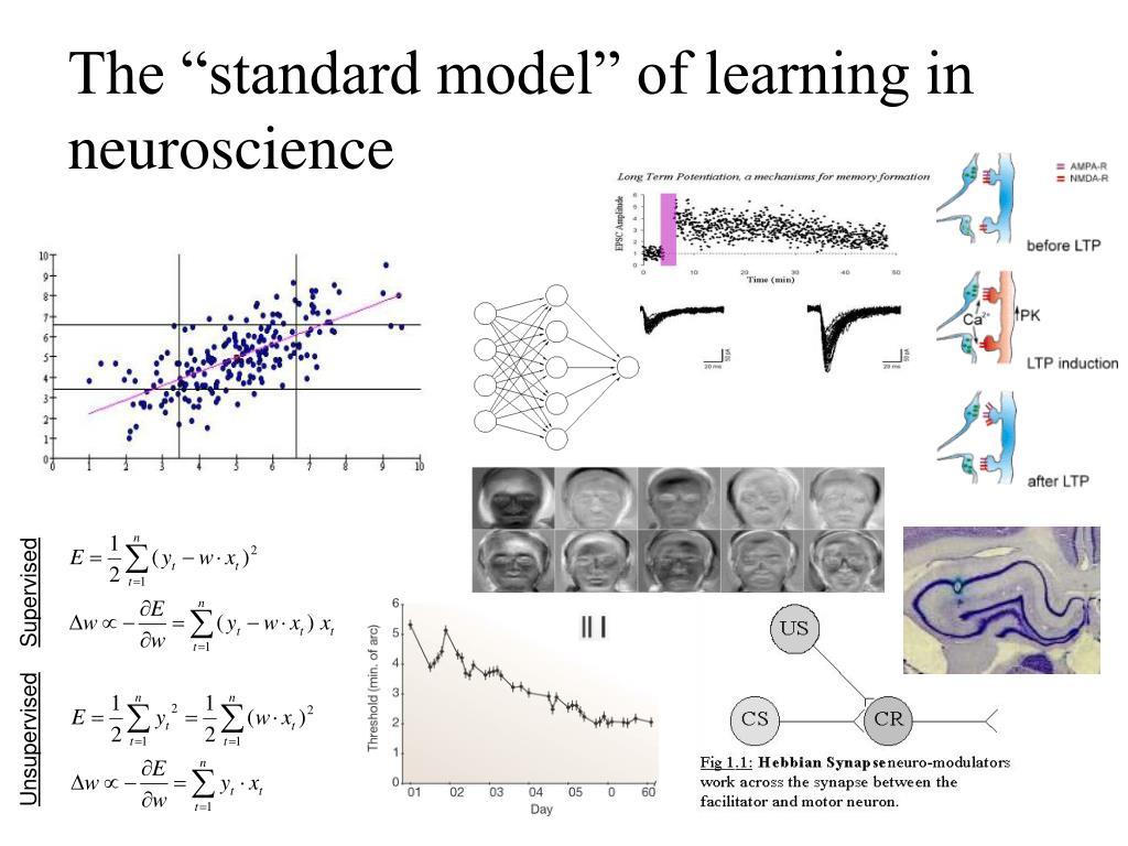"The ""standard model"" of learning in neuroscience"