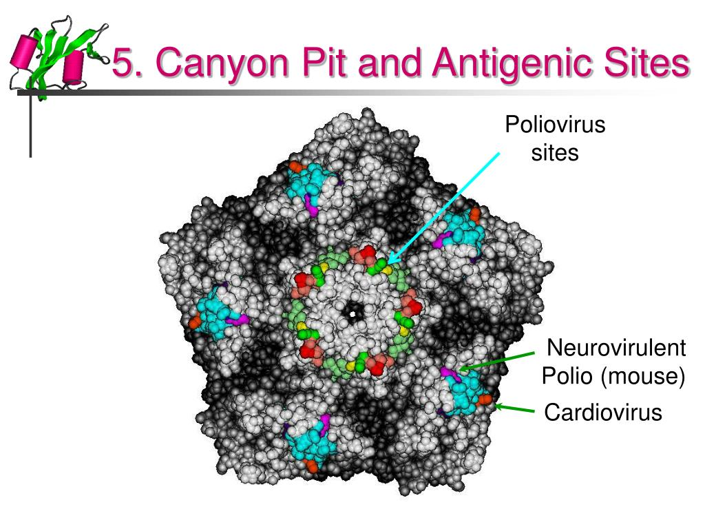 5. Canyon Pit and Antigenic Sites