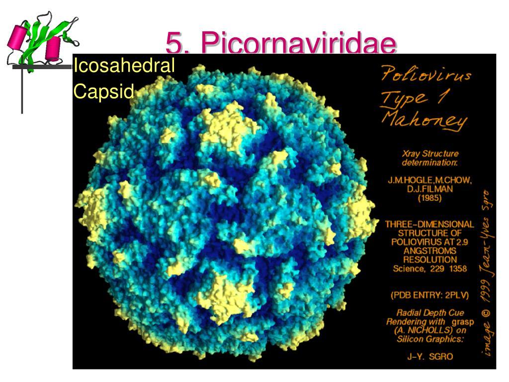 5. Picornaviridae