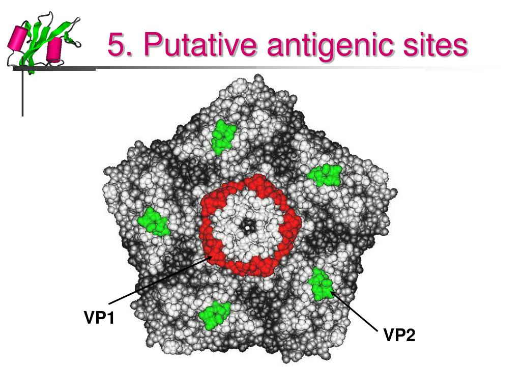 5. Putative antigenic sites