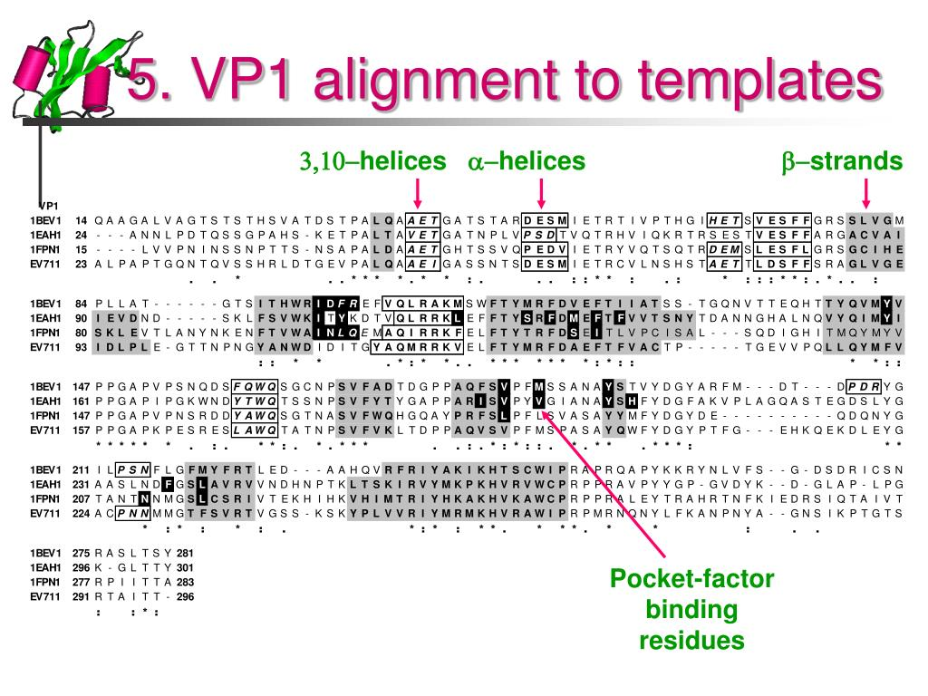 5. VP1 alignment to templates