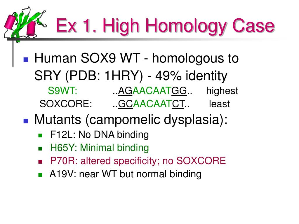 Ex 1. High Homology Case