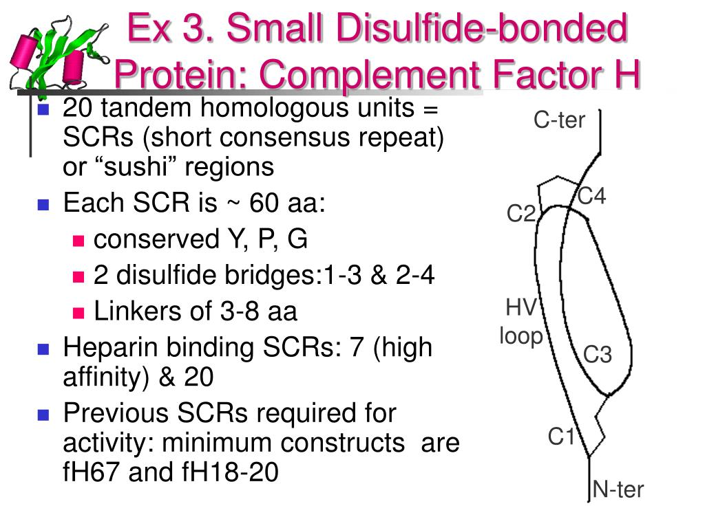 Ex 3. Small Disulfide-bonded Protein: Complement Factor H