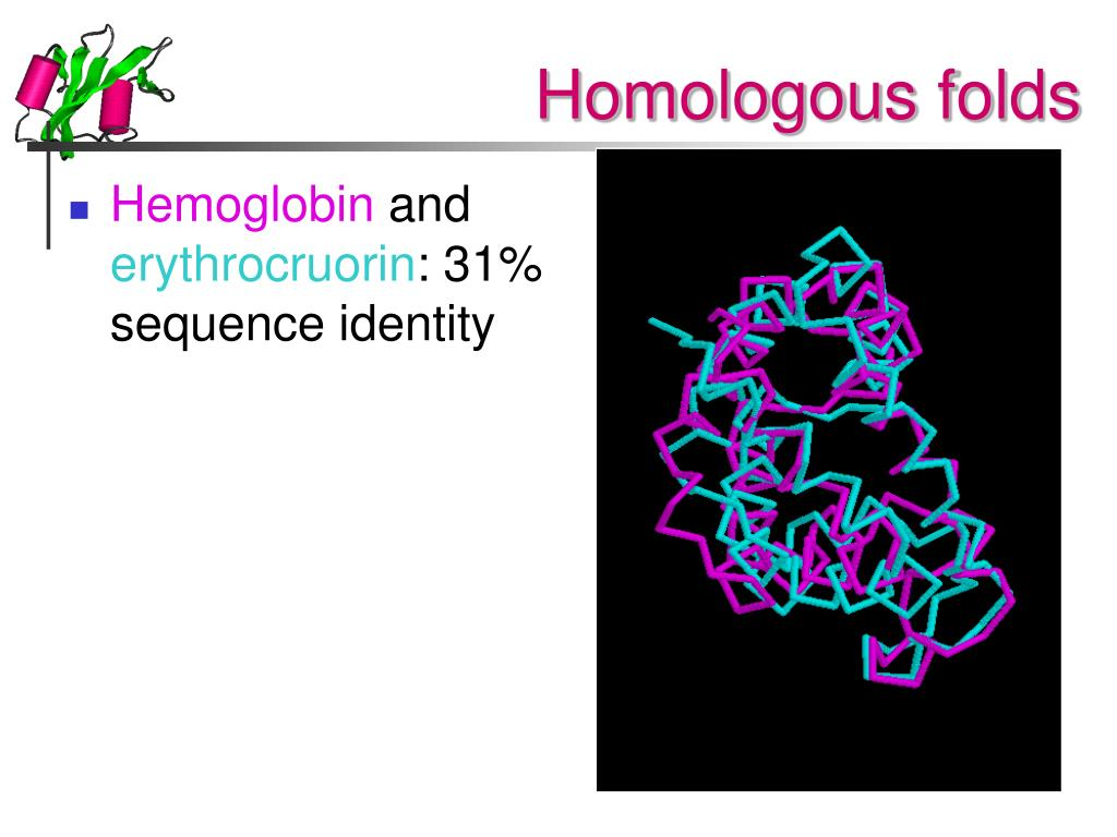 Homologous folds