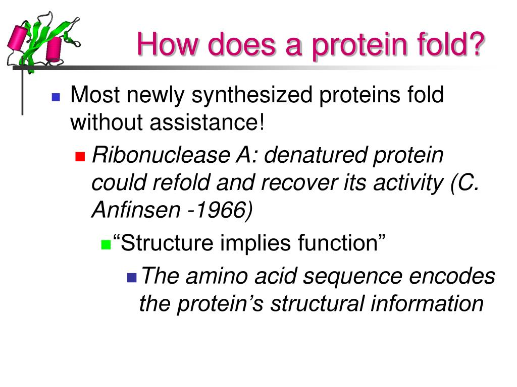 How does a protein fold?
