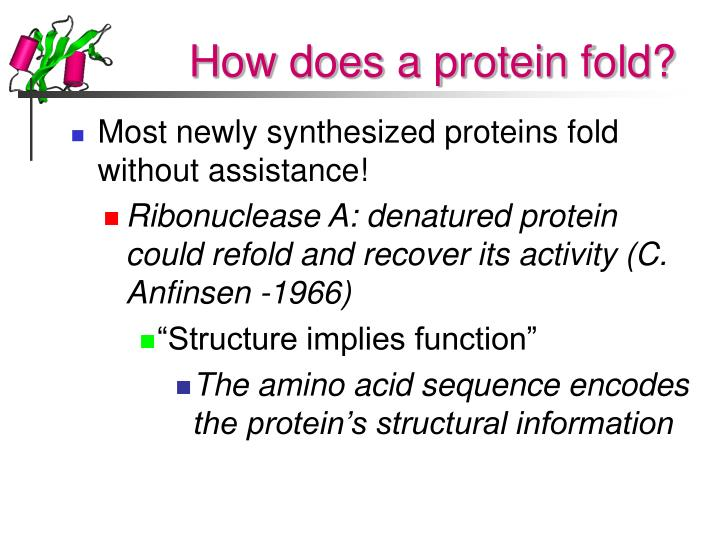 How does a protein fold l.jpg