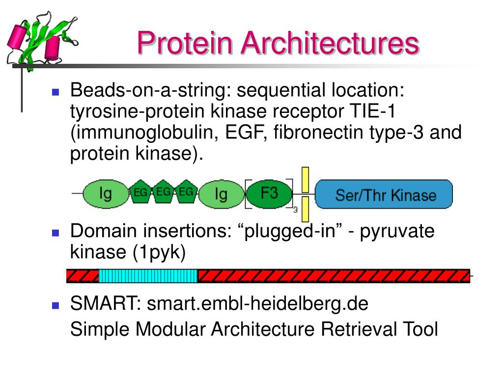 Protein Architectures