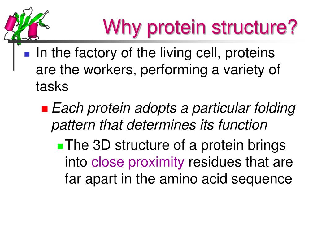 Why protein structure?