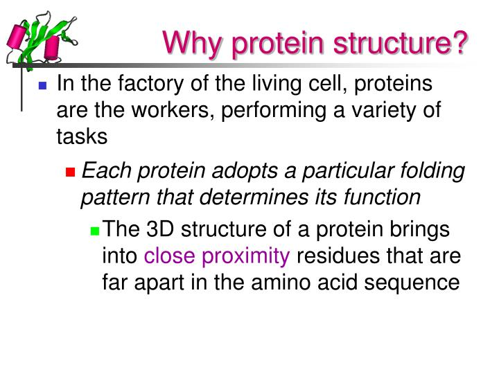 Why protein structure l.jpg