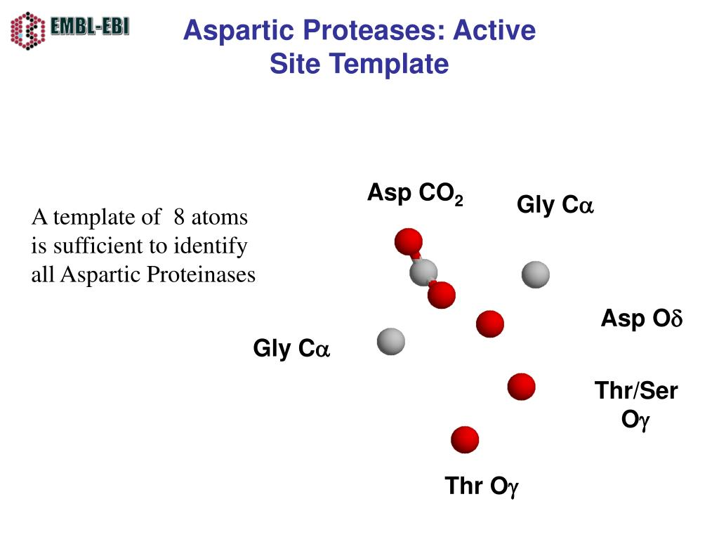Aspartic Proteases: Active Site Template