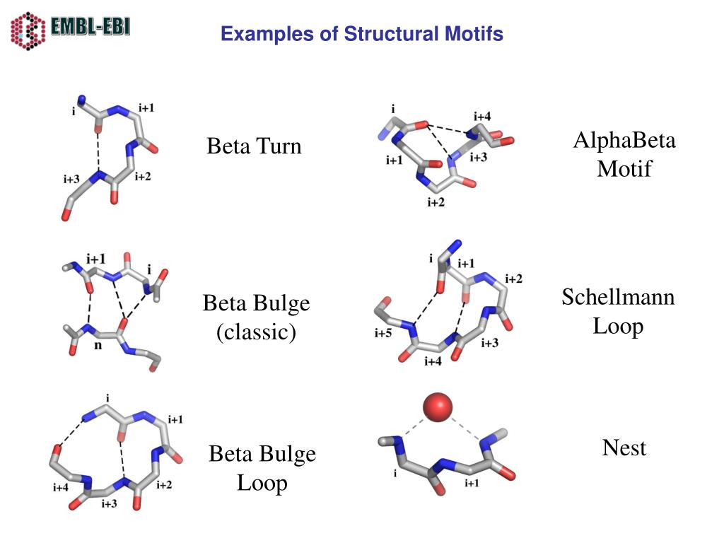 Examples of Structural Motifs