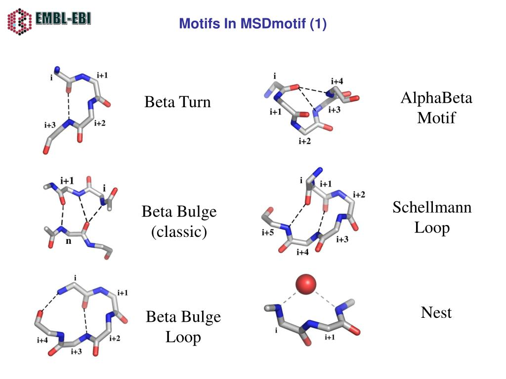 Motifs In MSDmotif (1)