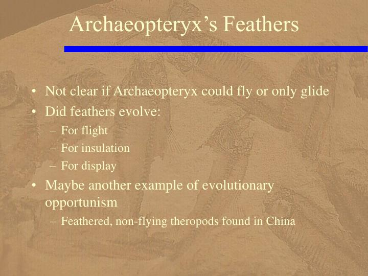 Archaeopteryx's Feathers