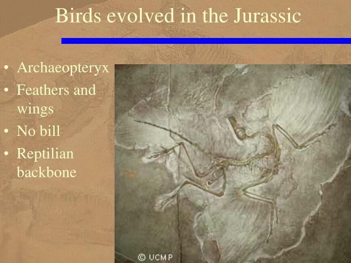 Birds evolved in the Jurassic