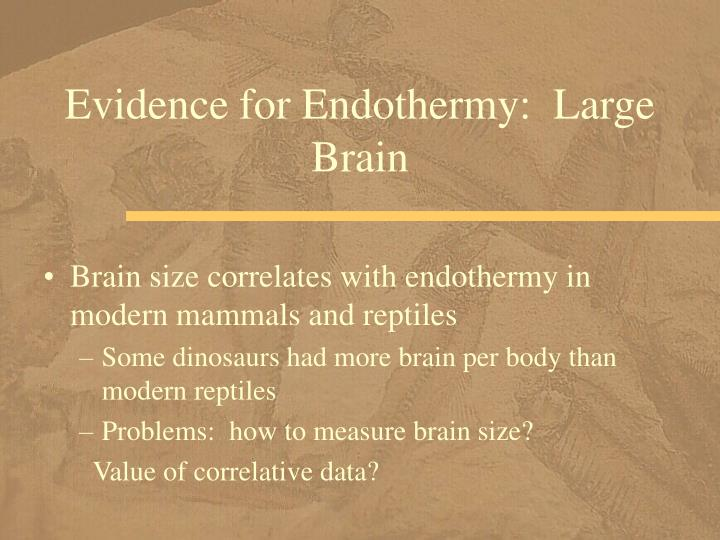 Evidence for Endothermy:  Large Brain