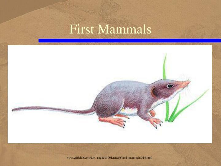 First Mammals