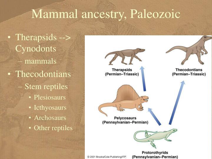 Mammal ancestry, Paleozoic