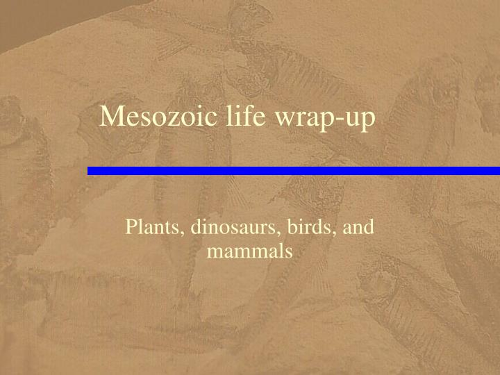 Mesozoic life wrap up
