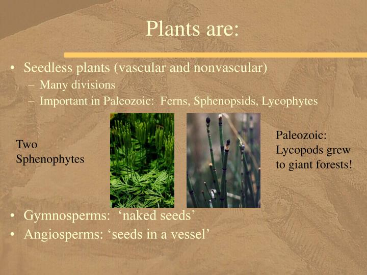 Plants are