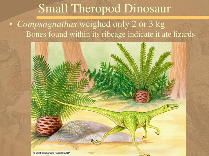 Small Theropod Dinosaur