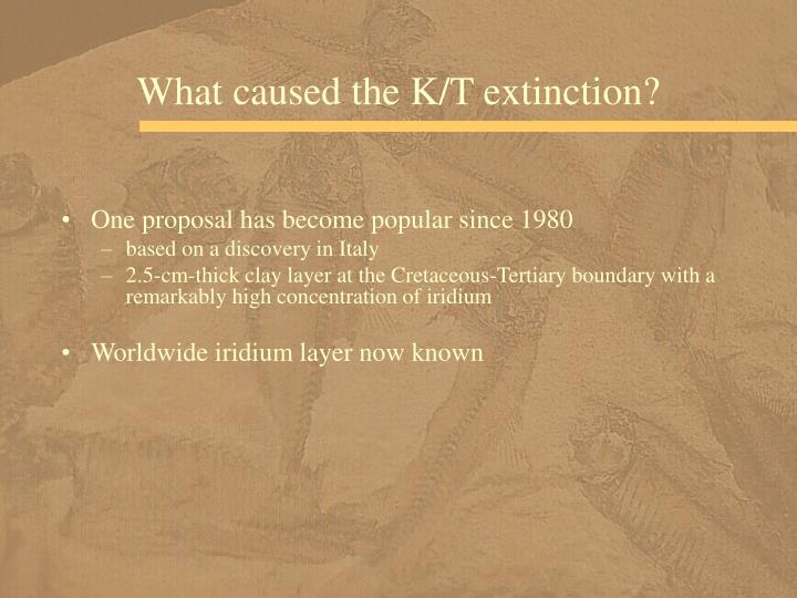 What caused the K/T extinction?