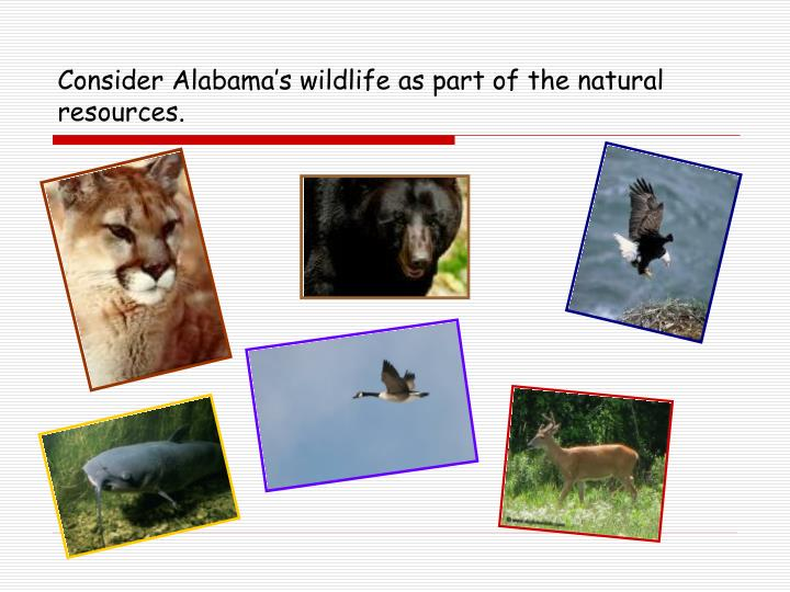 Consider Alabama's wildlife as part of the natural resources.