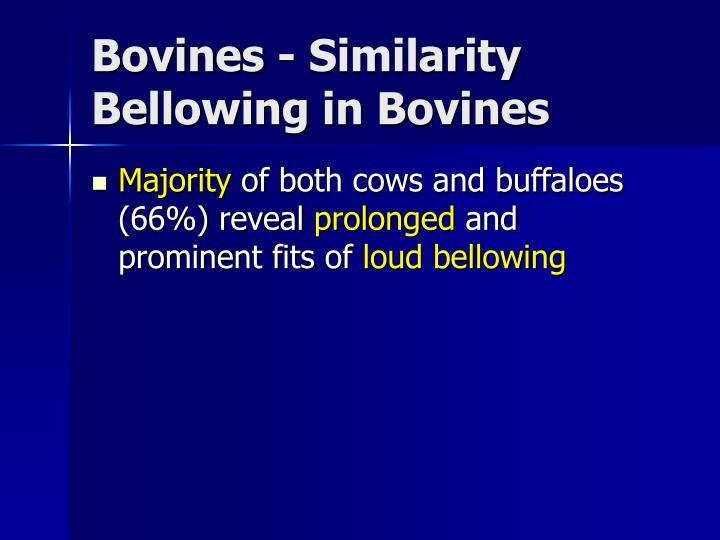 Bovines - Similarity