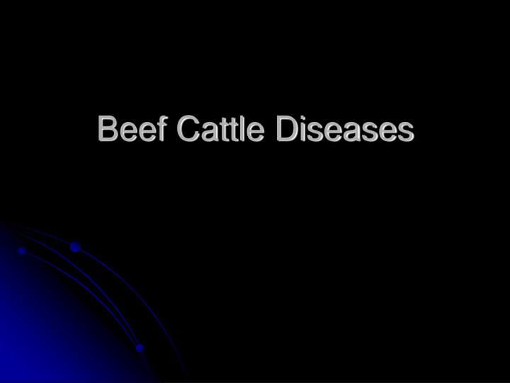 Beef cattle diseases