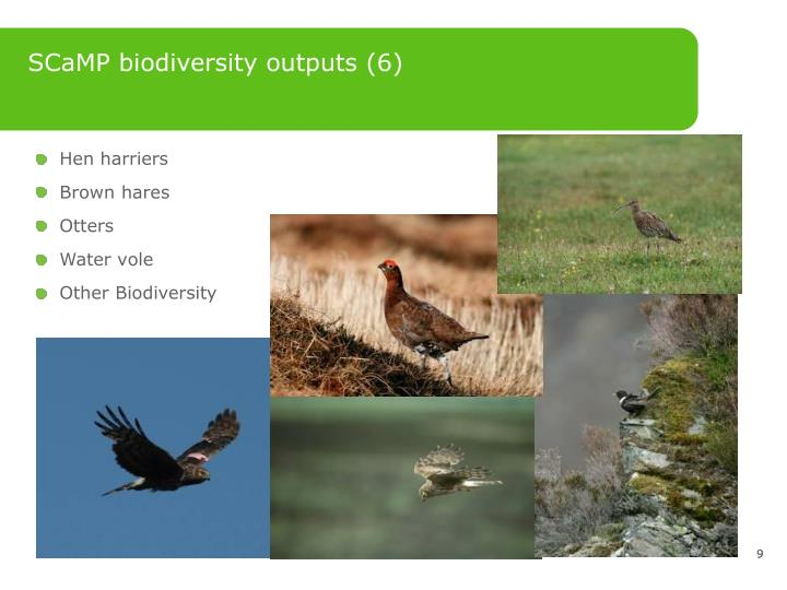 SCaMP biodiversity outputs (6)