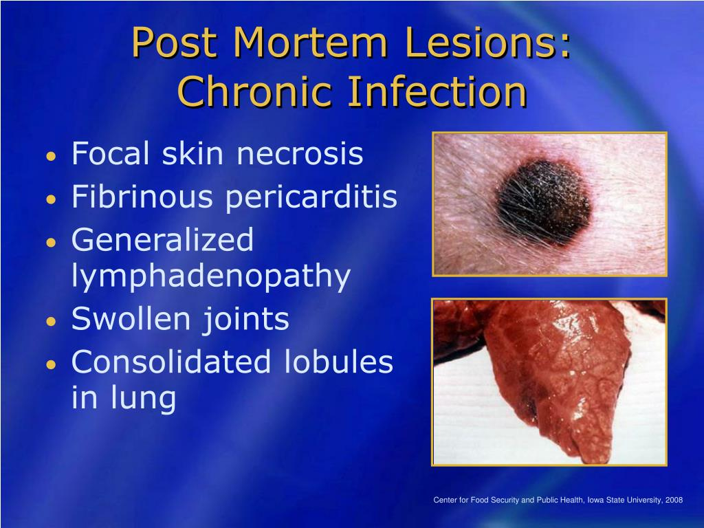 Post Mortem Lesions: