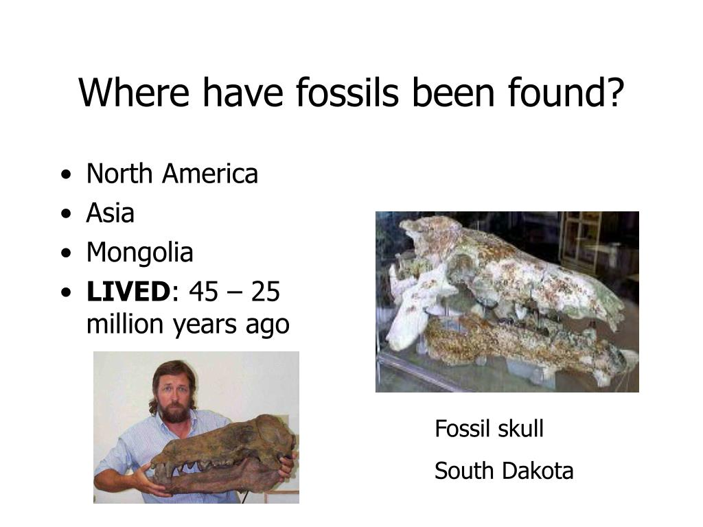 Where have fossils been found?