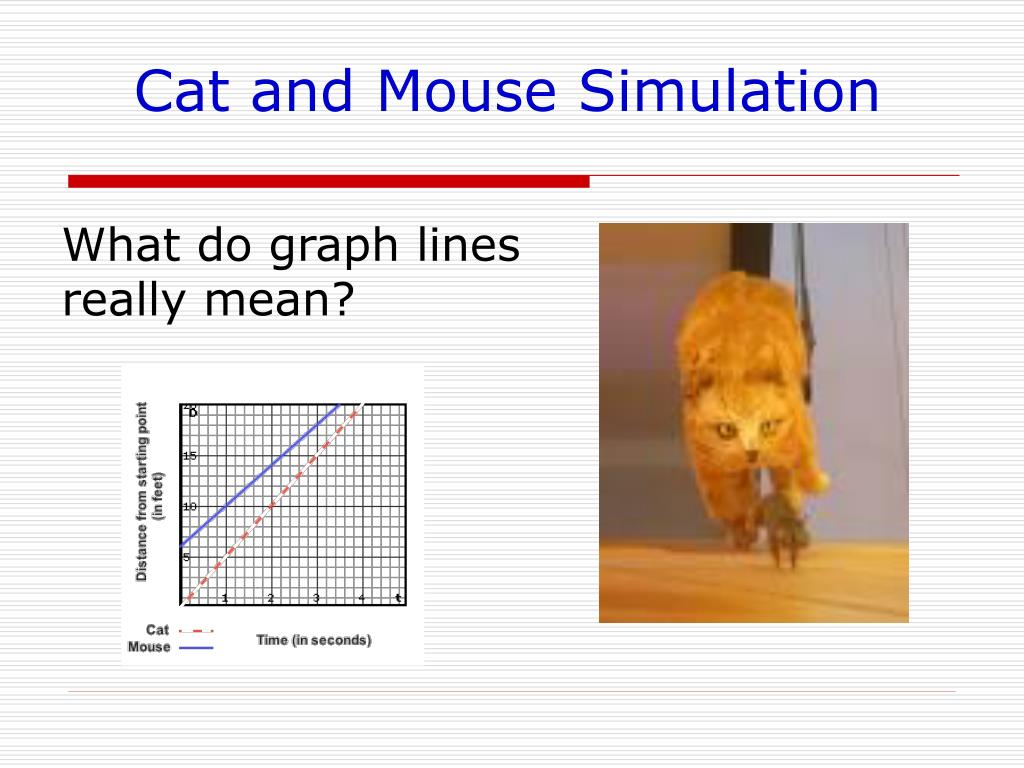 Cat and Mouse Simulation