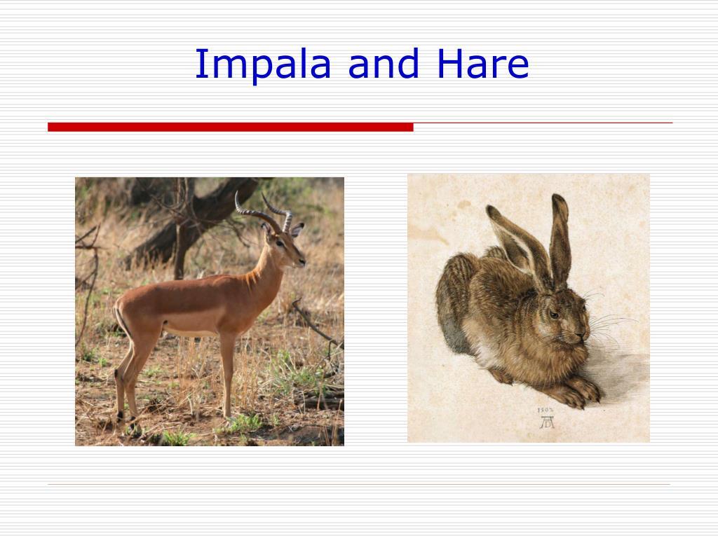 Impala and Hare