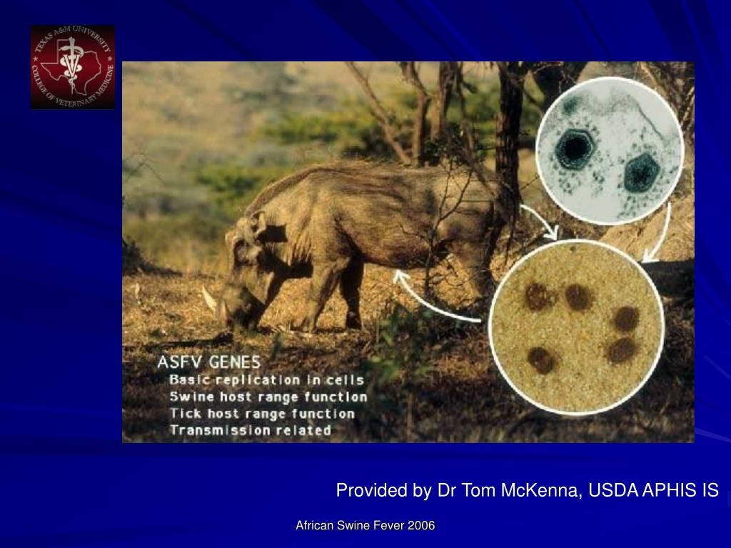 Provided by Dr Tom McKenna, USDA APHIS IS