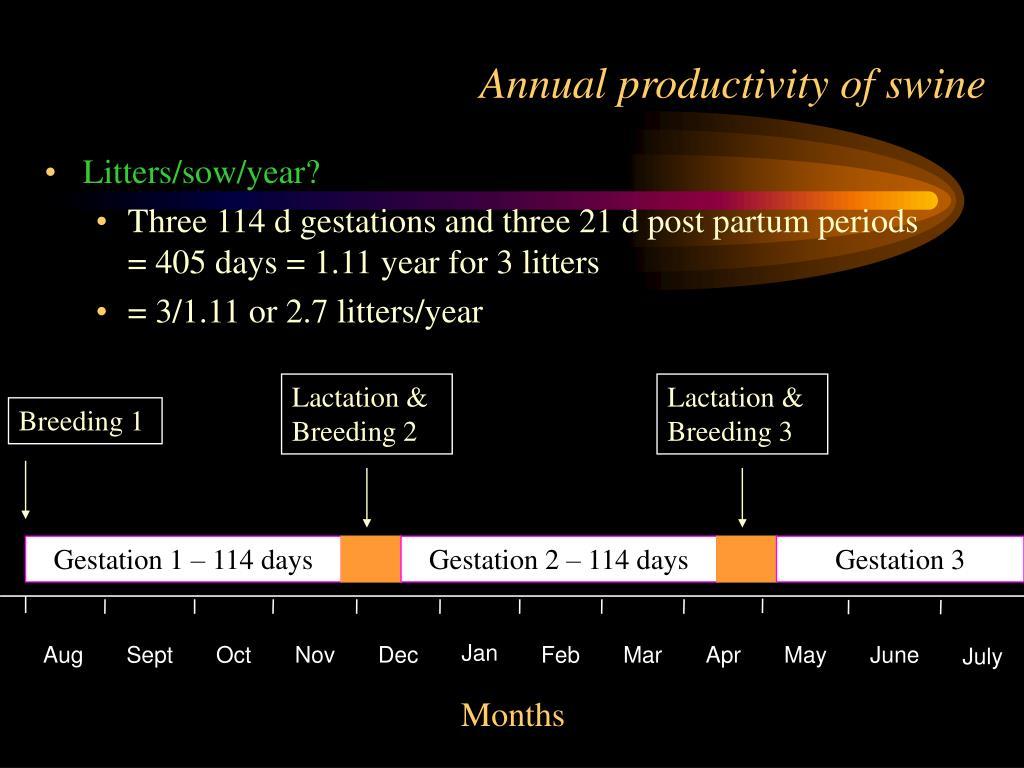 Annual productivity of swine