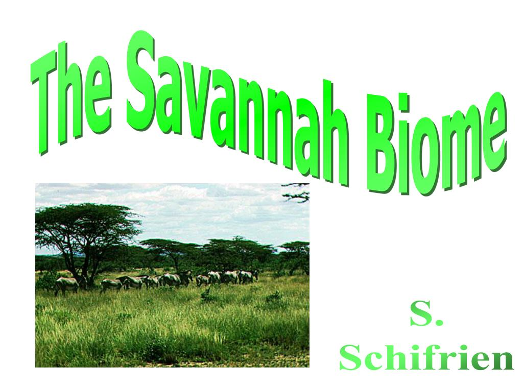 The Savannah Biome